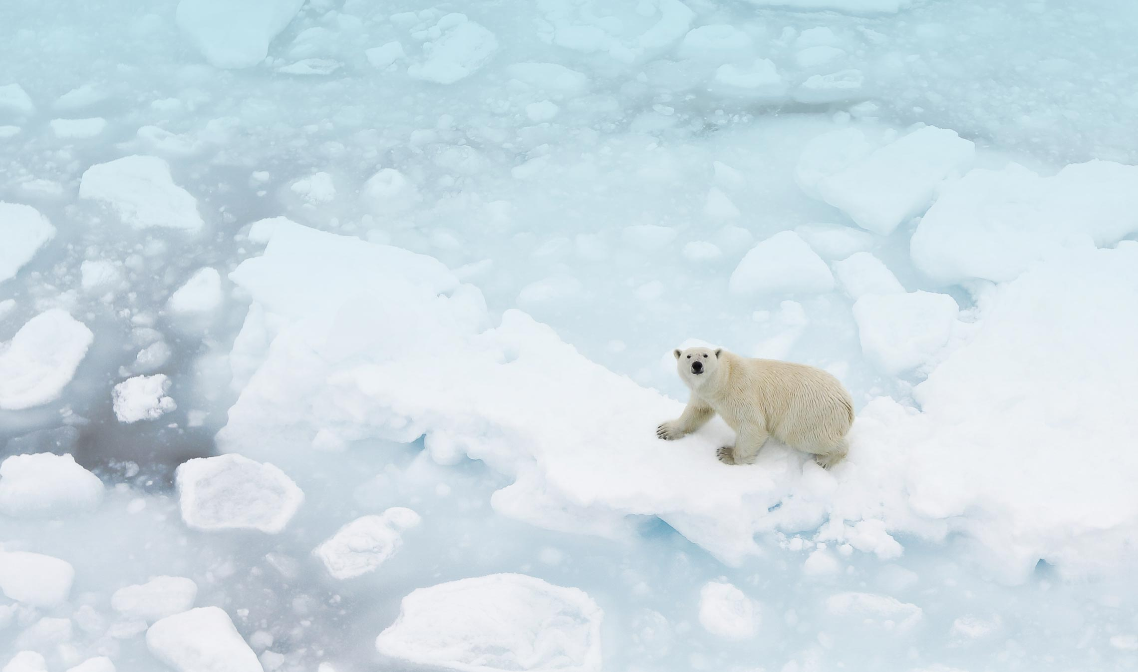 How does Arctic sea ice affect marine life?