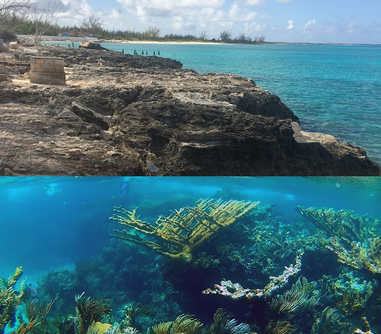 How do we reconstruct a living past from fossils? In the Bahamas, two ecosystems are captured in time just metres apart. Photo by Daniel G. Dick.