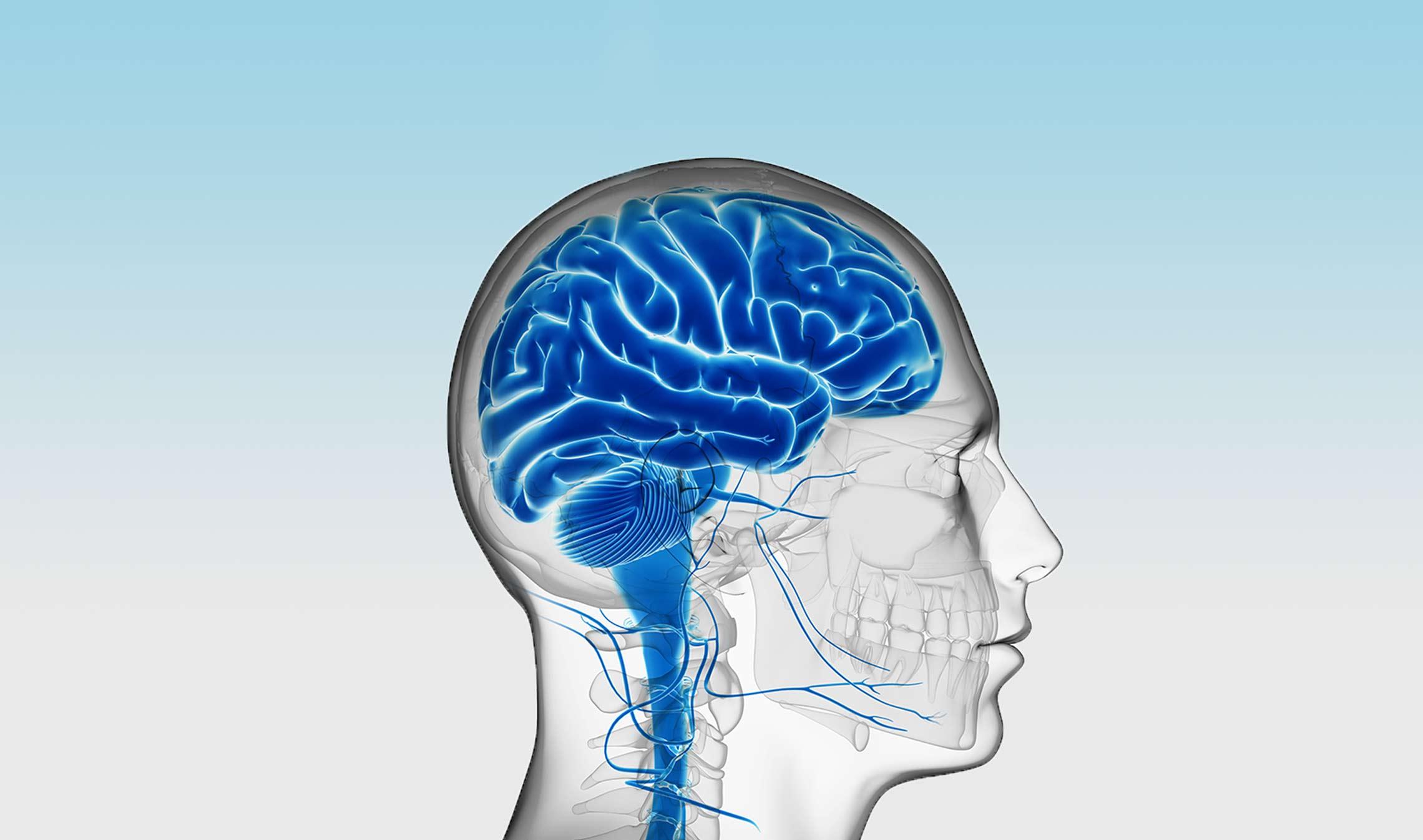 Can stem cells reverse brain damage?