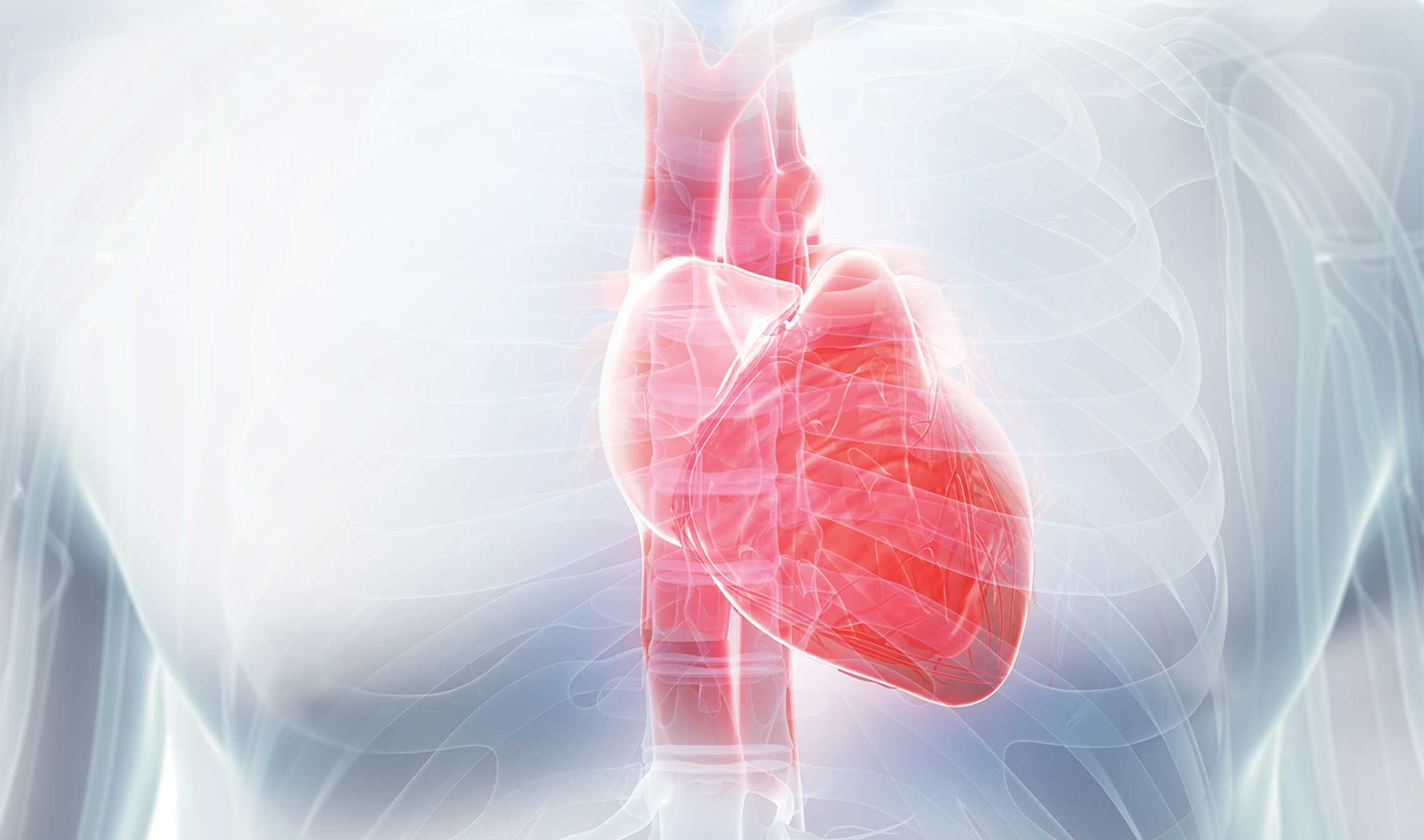 How can we regenerate a damaged heart?
